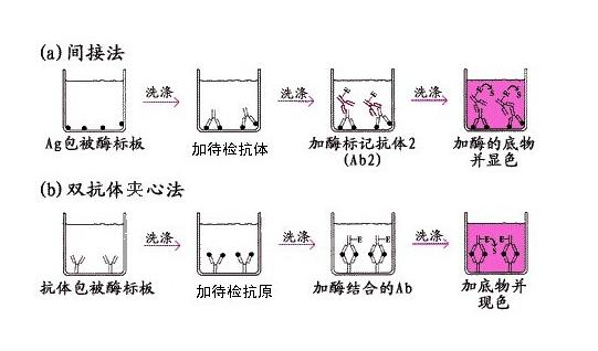 """""""小鼠抗α-胞衬蛋白抗体IgG(α-Fodrin IgG)ELISA试剂盒""""特点概述 1.专一性强。抗原与抗体的免疫反应是专一反应,而免疫酶技术以免疫反应为基础,所检测的对象是抗原(或抗体),使用的抗体除标记了酶以外,与普通抗体的免疫反应特性并无多大差别。 2.灵敏度高。由于抗体联结上了酶,因此,借助于酶与底物的显色反应,显示抗原与抗体的结合,大大提高了检测的灵敏性,使检测水平接近放射免疫测定法。 3."""