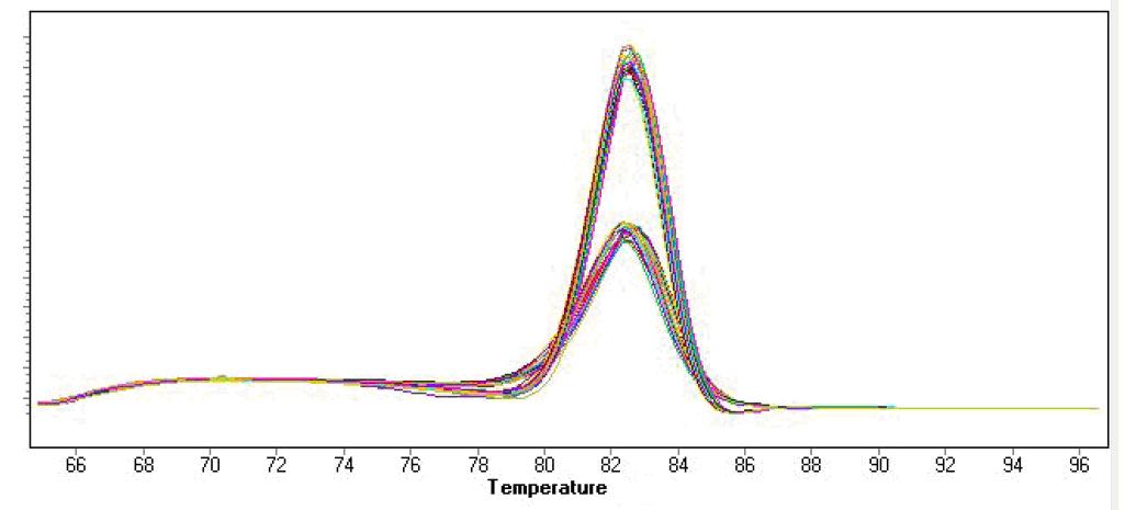 实时荧光定量pcr rt-pcr