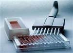 北京ELISA试剂盒价格,豚鼠白介素12(IL-12/P70)ELISA KIT说明书