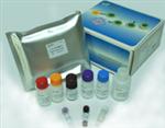 空肠弯曲菌荧光定量PCR检测试剂盒