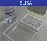 缓冲蛋白胨水