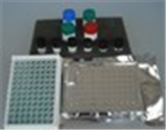 氯霉素检测试纸条(液态样品)