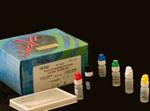 盐酸克伦特罗检测试纸条(尿样)