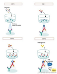 山羊磷酸化腺苷酸活化蛋白激酶ELISA试剂盒