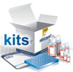 豚鼠免疫球蛋白G(IgG)ELISA试剂盒