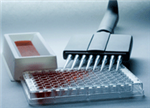 人B-淋巴细胞趋化因子1(BLC-1)ELISA试剂盒