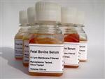 豚鼠免疫球蛋白A(IgA)检测试剂盒