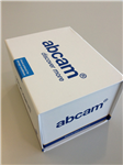 BrdU,溴脱氧尿苷单克隆抗体