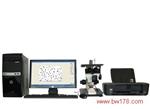 电脑数码影像金相显微镜 可视显微镜 电脑数码影像金相分析仪