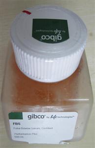 GIBCO血清,胎牛血清(南美乌拉圭)价格