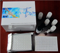 选择素价格,进口猴E选择素(E-Selectin)ELISA试剂盒